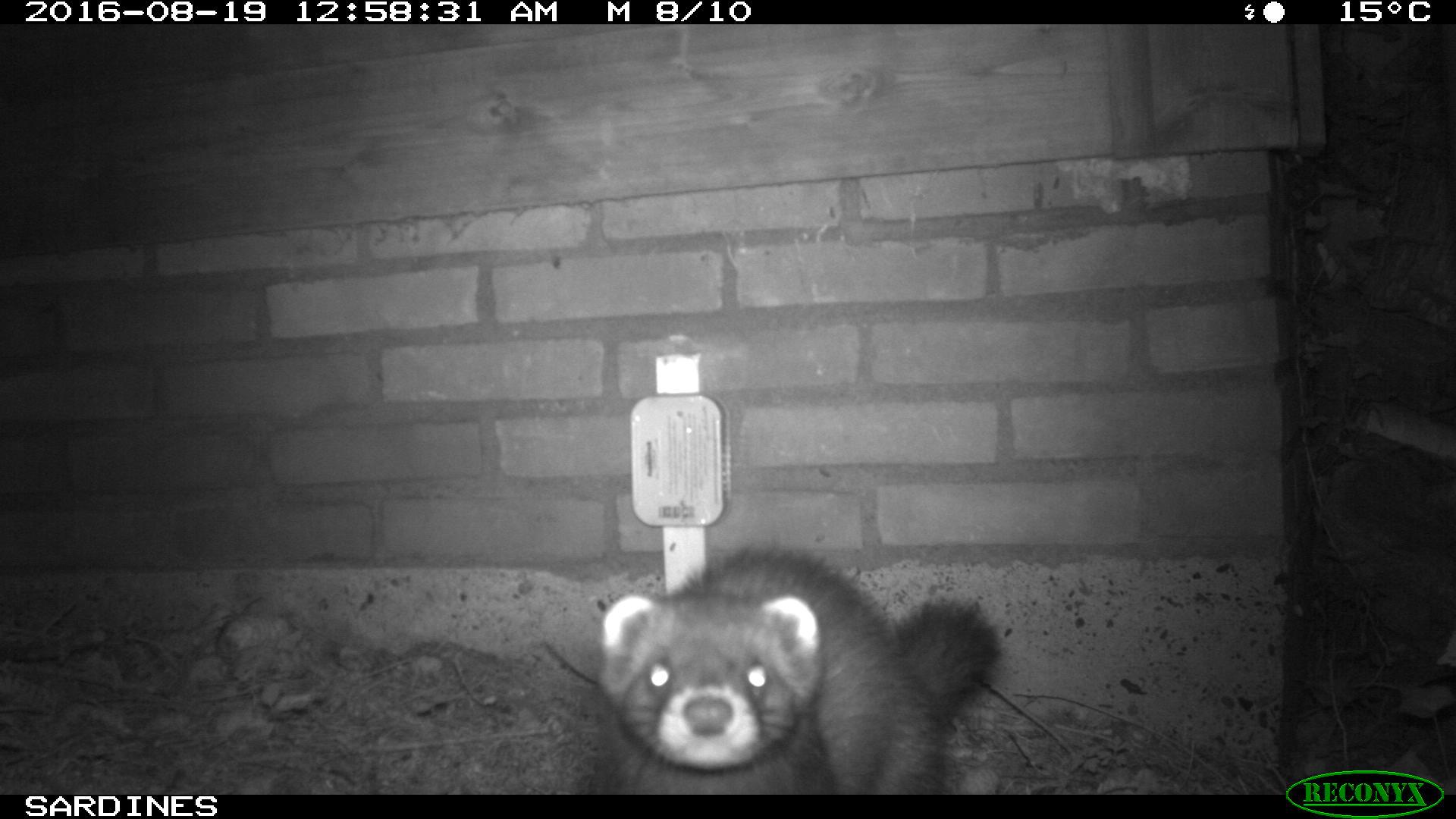 Burgerwetenschapsproject 'Wildcamera – zoogdieren in de achtertuin'