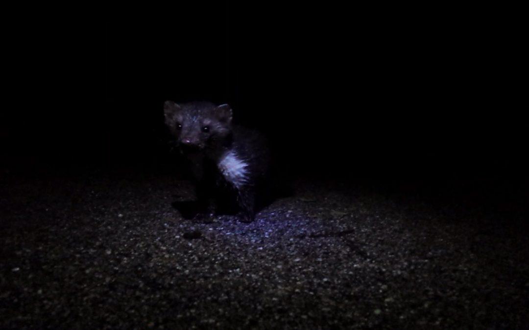 Video: random encounters