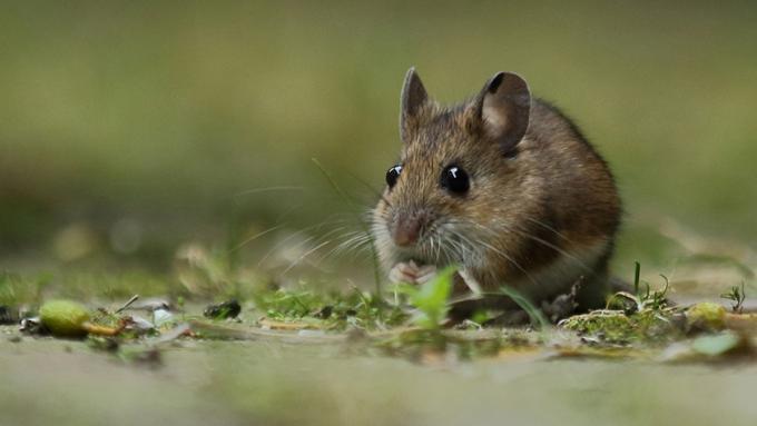 Muizen in de winter