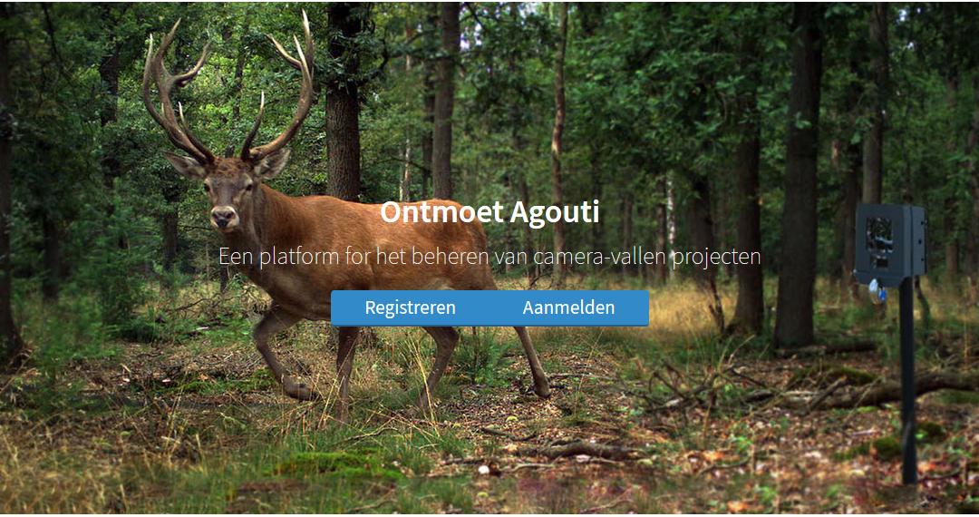 Agouti: Het verwerken van wildcamera beelden