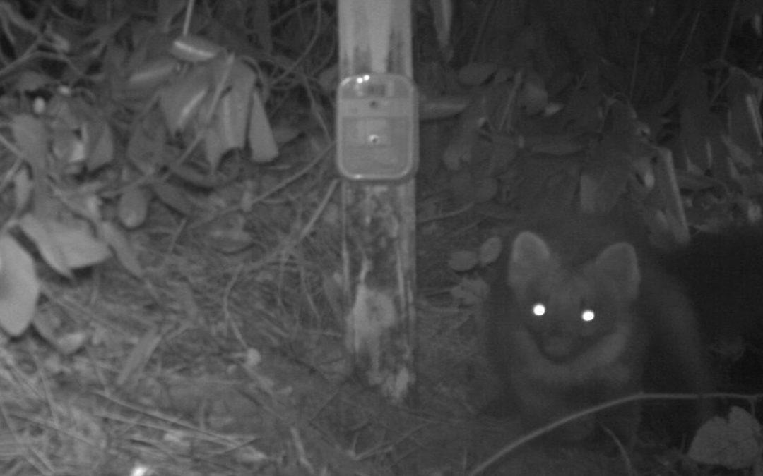 Project wildcamera; Zoogdieren in de achtertuin – Den Haag