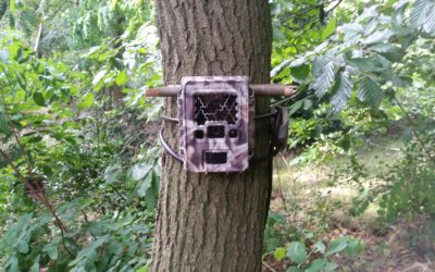 Hoe zet jij jouw wildcamera het meest effectief in?