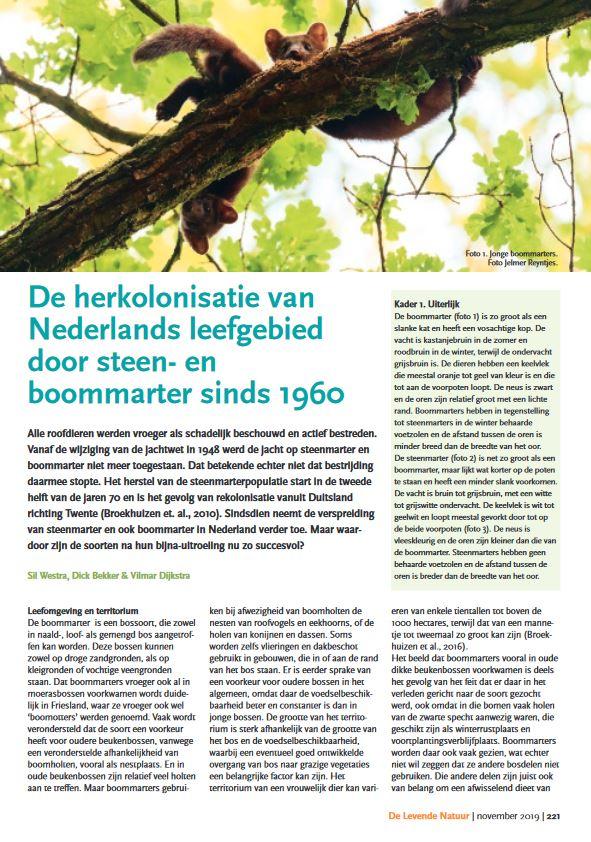 De herkolonisatie van Nederlands leefgebied door steen- en boommarter sinds 1960