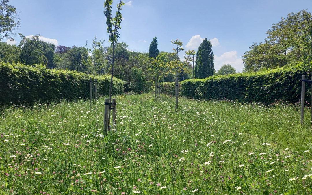 Tips om de biodiversiteit in je tuin te vergroten!